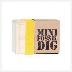 Seedling Mini Fossil Dig